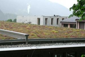 Harderwijk: subsidie voor groene daken!