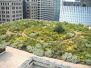 biodiverse green roof system