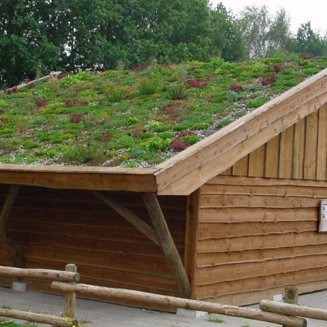 Sedum op het dak staat prachtig. IJzersterke vetplantjes, die welhaast ...
