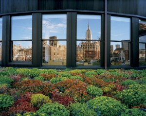 Green Roofs NG photo