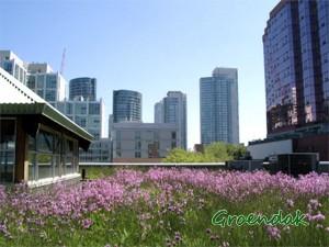 Groene daken pure noodzaak