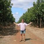 aanplant groen brasil teak