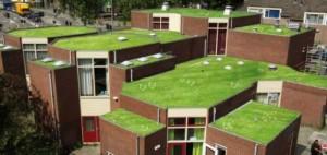 Ook Utrecht geeft subsidie op groene daken.