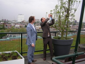 Groen dak op Groothandelsgebouw Rotterdam