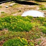 Groene daken te zien, midden in het land (Scherpenzeel)