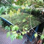 Groendak Utrecht - groen proefdak golfplaat