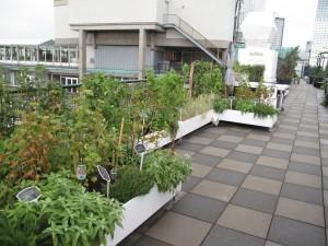 Utrecht test duurzame daken