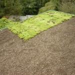 Bedrijven krijgen subsidie voor aanleg groendaken