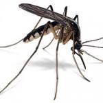 Insekten teisteren de steden.