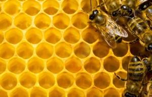 2 bijen in 1 klap…
