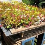 groene daken fleur