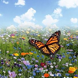 Wat is biodiversiteit? en waarom is dat belangrijk?