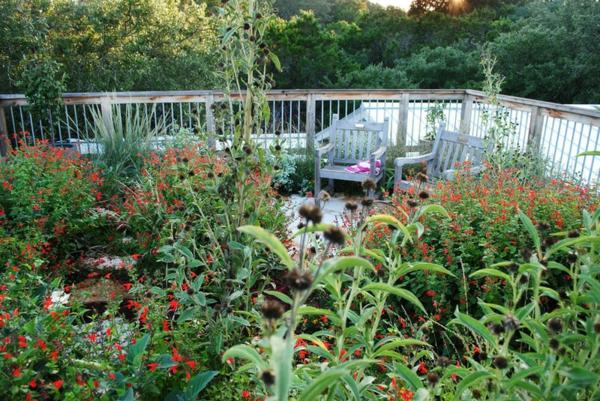 Natuurdak met biodiversiteit - Terras schuilplaats ...