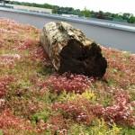 Leg een boom op je dak.