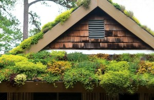 dak-schuin-dak-huis-tuin-daktuin