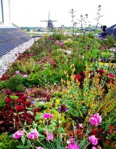 groendak-bloemen-planten-dak-huis