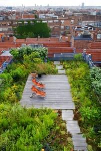 urban-daktuin-tuindak-groen dak
