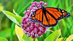 butterfly-580x326