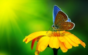close-up-foto-vlinder