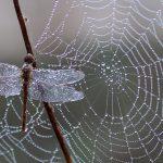 Bescherm insecten met behulp van een groendak