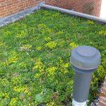 Groendaken tegen fijnstof en CO2